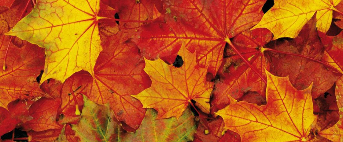 harmony-oriente-bassano-del-grappa-percorso-autunno-etnico