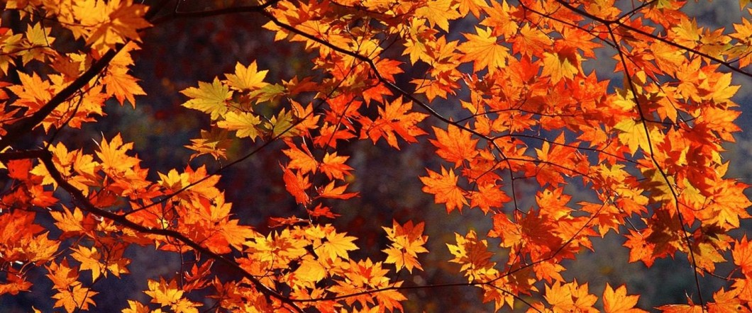 autunno etnico