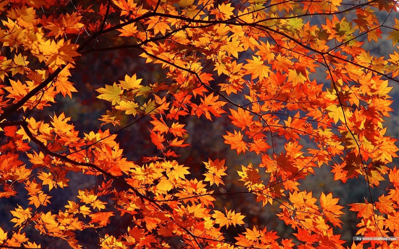 Promozione autunno etnico i 5 passi verso l 39 inverno for Sfondi autunno hd