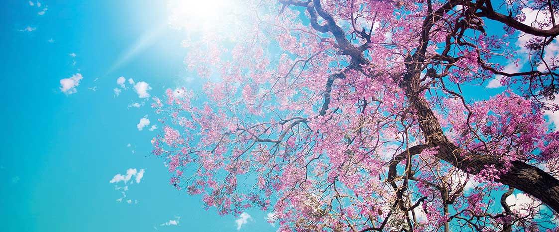 harmony-oriente-bassano-del-grappa-percorso-risveglio-primavera
